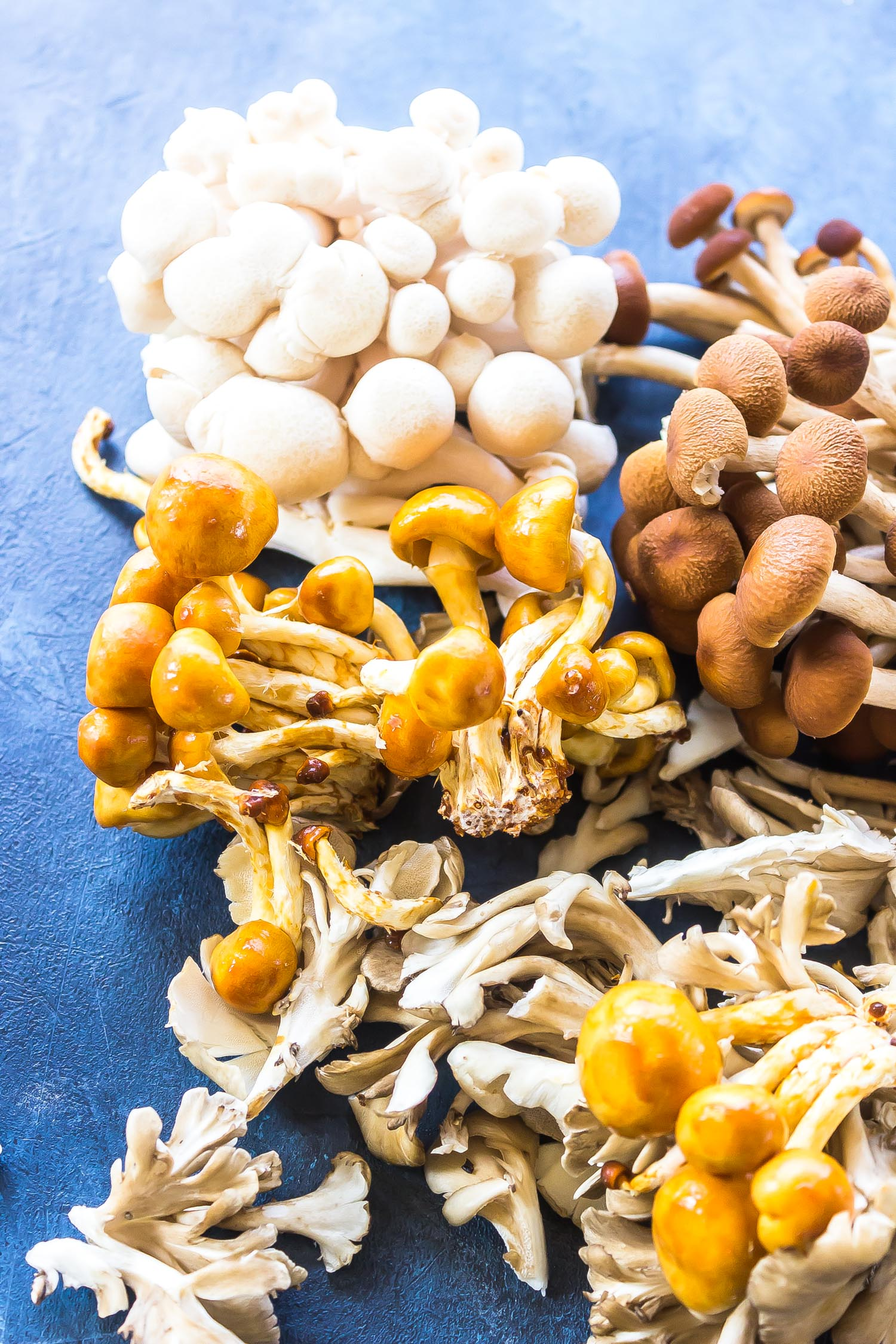 an assortment of wild mushrooms on a blue background